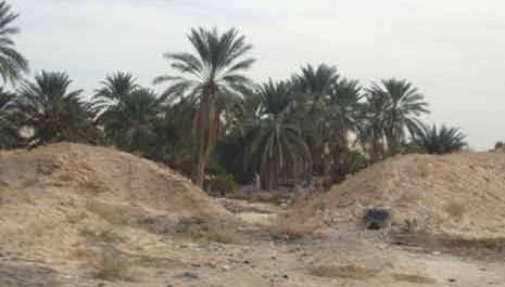 Commune de Bordj Ben Azzouz (Biskra) Virée au royaume de Deglet Nour