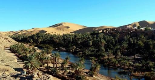 Algérie:Lancement prochain d'une étude pour réhabiliter 62 oasis de palmeraies de la wilaya de Bechar