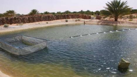 Un programme d'intégration de la pisciculture à l'agriculture à Tizi-Ouzou et Bouira