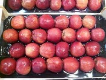 Khenchela : la production de pomme de contribue à l'autosuffisance du marché national