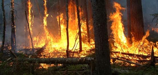 Températures estivales et patrimoine végétal en danger : Plus de 700 hectares décimés par le feu en 24 heures