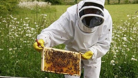 Fête du miel et de l'abeille à Tizi Ouzou: une coopérative apicole pour Ahrik à partir de septembre