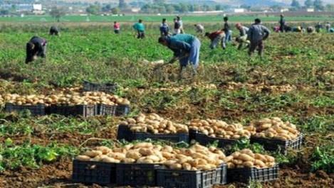 Mostaganem: La pomme de terre toujours hors de prix