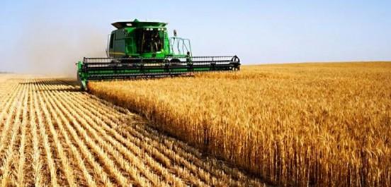 Céréaliculture: Une saison qui fait peur!