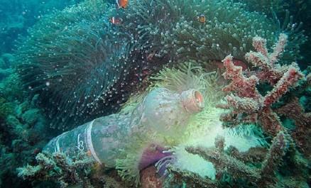 Oran / Colloque international sur la biodiversité marine et l'écosystème : Les chercheurs tirent la sonnette d'alarme