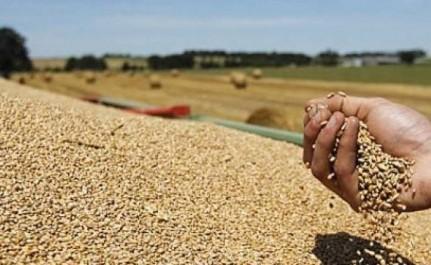 Céréales: la facture d'importation en baisse de plus de 26%