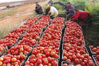 Aïn Témouchent assure son autosuffisance alimentaire: elle exporte l'excédent vers d'autres wilayas