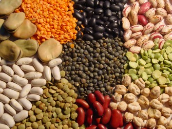 Vers l'autosuffisance en légumes secs d'ici à 2020