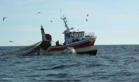 Des pêcheurs d'Azeffoun tirent la sonnette d'alarme: «d'ici dix ans, il n'y aura plus de poisson».