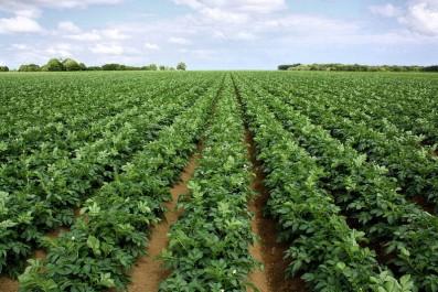 Le ministre de l'Agriculture, M. Abdesselam Chelghoum, à partir de Aïn Defla : «Le défi relatif à la production de la semence de pomme de terre doit être relevé».