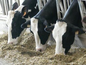 Bassin Laitier De Mostaganem: Un enjeu capital pour la production de lait, du biogaz et des engrais minéraux