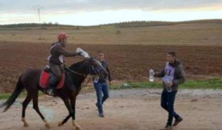 Équitation: l'Algérie remporte le raid d'Endurance 120 Km de Tunis