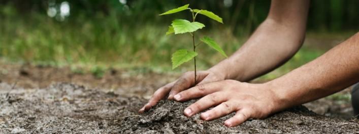 Mostaganem: 5 000 nouveaux arbres plantés à Aïn Boudinar