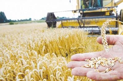 190 quintaux de blé tendre destinés à la contrebande saisis