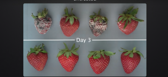 Une solution pour allonger la durée de vie des fruits et légumes