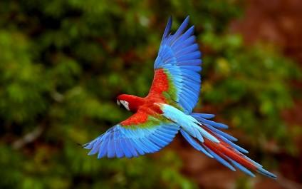 Trafic d'oiseaux exotiques: Deux braconniers arrêtés et 85 perroquets saisis à Tébessa