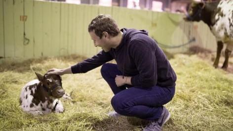 Mark Zuckerberg promet qu'il ne vise pas la Maison-Blanche