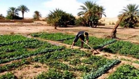 Bedoui appelle les jeunes à investir dans le secteur agricole
