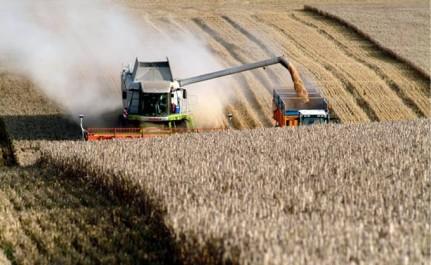L'OAIC va s'impliquer dans la production pour réduire la facture d'importation de céréales.