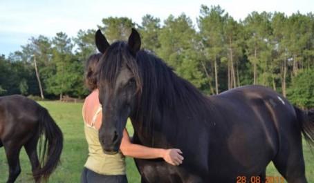 L'âne berbère et le cheval dit «arabe» !