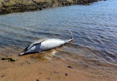 Mostaganem: Découverte d'un dauphin échoué à Salamandre