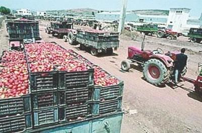 Pour réclamer leurs créances auprès ce partenaire dont le crédit bancaire et bloqué: Sit-in des agriculteurs devant une conserverie à El-Tarf