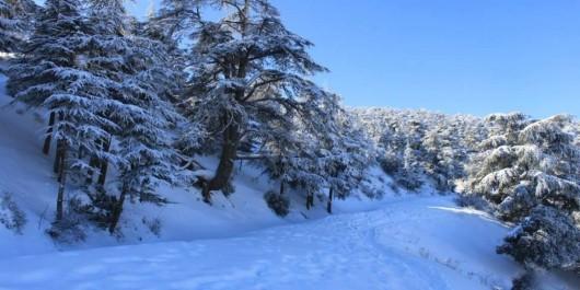 Importantes chutes de neige enregistrées à Naâma