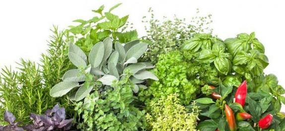 Vente de plantes médicinales et pratique illicite de la hidjama: Des mises en demeure envoyées à un repenti reconverti en guérisseur