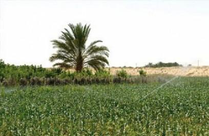 L'investissement agricole à Ouargla: programme d'électrification de périmètres à Hassi-Messaoud
