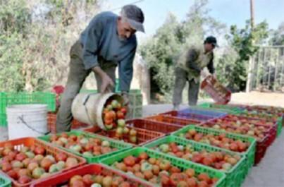 Le maroc engrange 10 milliards de dollars par an des terres sahraouies