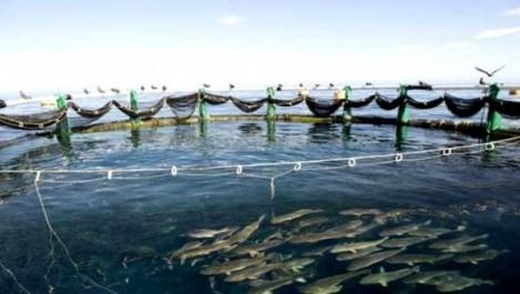 Algérie-UE: lancement d'un programme d'appui au secteur de la pêche et de l'aquaculture