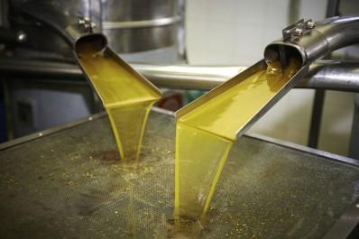 Production d'huile d'olive:  Alerte à la bactérie tueuse en Espagne