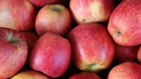 La réduction des importations profite à la pomme produite localement