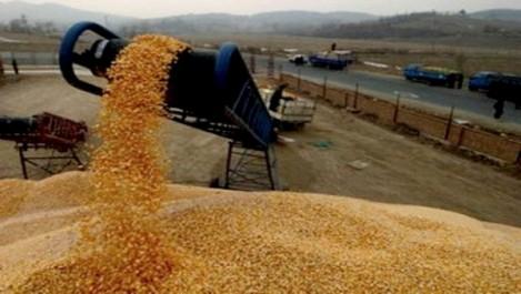 Souk Ahras: L'OAIC veut des terres pour la production du blé dur