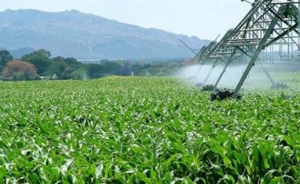 Naama : hausse de la superficie agricole irriguée