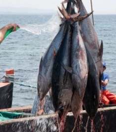 Algérie-Aquaculture: objectif de production de 17.000 tonnes en 2017