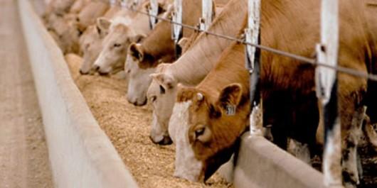 Coopération Algéro-Française: Des majors de l'aliment du bétail s'engagent