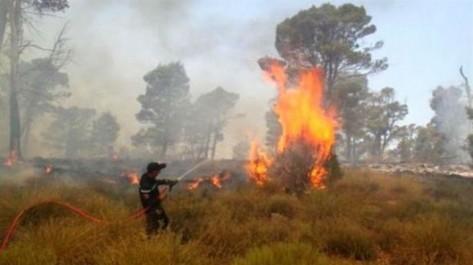 Relizane: Plus de 890 bottes de foin ravagées par les flammes