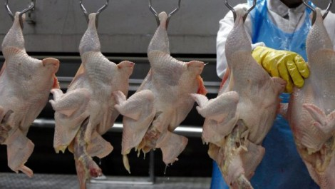 Aïn Defla: Instabilité des prix du poulet