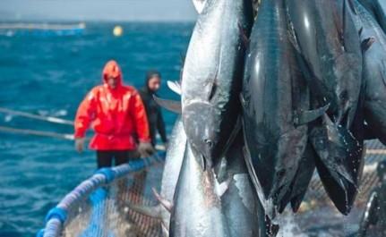 Pêche et aquaculture: visite d'une délégation d'experts algériens et de l'Union européenne à Mostaganem
