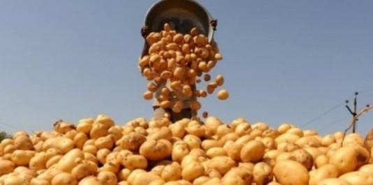 Pour lutter contre la spéculation : déstockage de 150 tonnes de pomme de terre