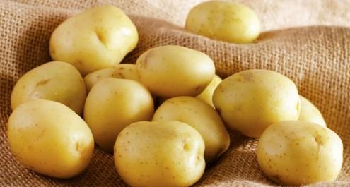 Mostaganem: Une production de 124 000 q de pomme de terre précoce attendue