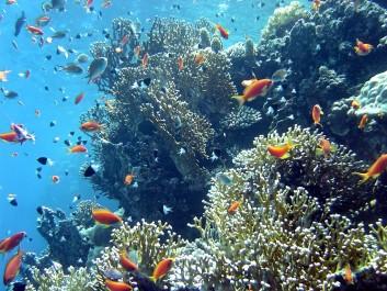Les côtes méditerranéennes menacées: Les écosystèmes marins sous surveillance