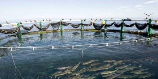 Les professionnels de la Pêche et l'aquaculture bénéficient de prestations d'assurances de personnes
