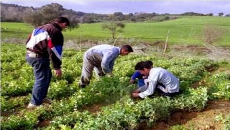 M'sila: Une formation pour développer la steppe en direction des agriculteurs-éleveurs