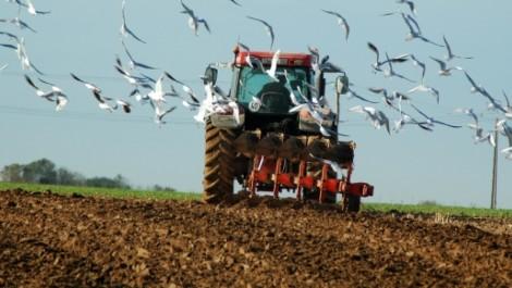 Formation à Tipasa: Rush sur les métiers du bâtiment et de l'agriculture