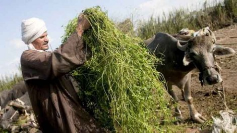 Sécurité alimentaire : La FAO tire la sonnette d'alarme sur les effets des conflits
