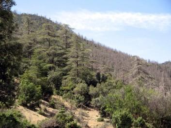 Promotions immobilières sur les monts de Séraïdi: Du béton à la place de la forêt