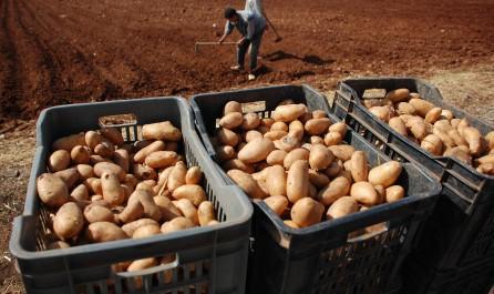 Envolée du prix de la pomme de terre : les citoyens préoccupés.