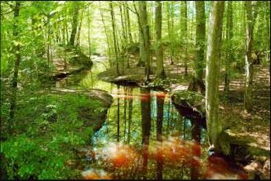 Direction des forêts d'El tarf: Une semaine d'exposition dédiée aux plantes ornementales